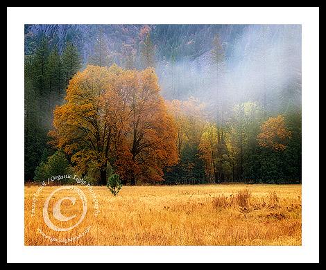 autumnmeadowfb
