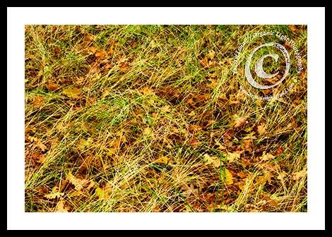 meadowgrassfb