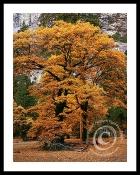 autumnelegance