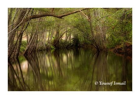 Reflection of trees in the Big Sur river