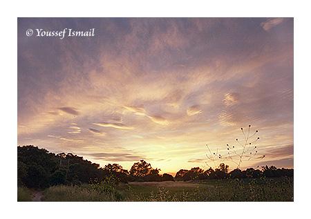 Lagunitas Sunset
